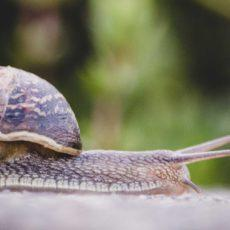 5 Key Reasons Why Your WordPress Site is Slow