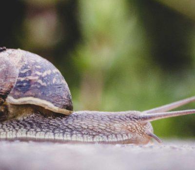 WordPress Site is Slow like a Snail